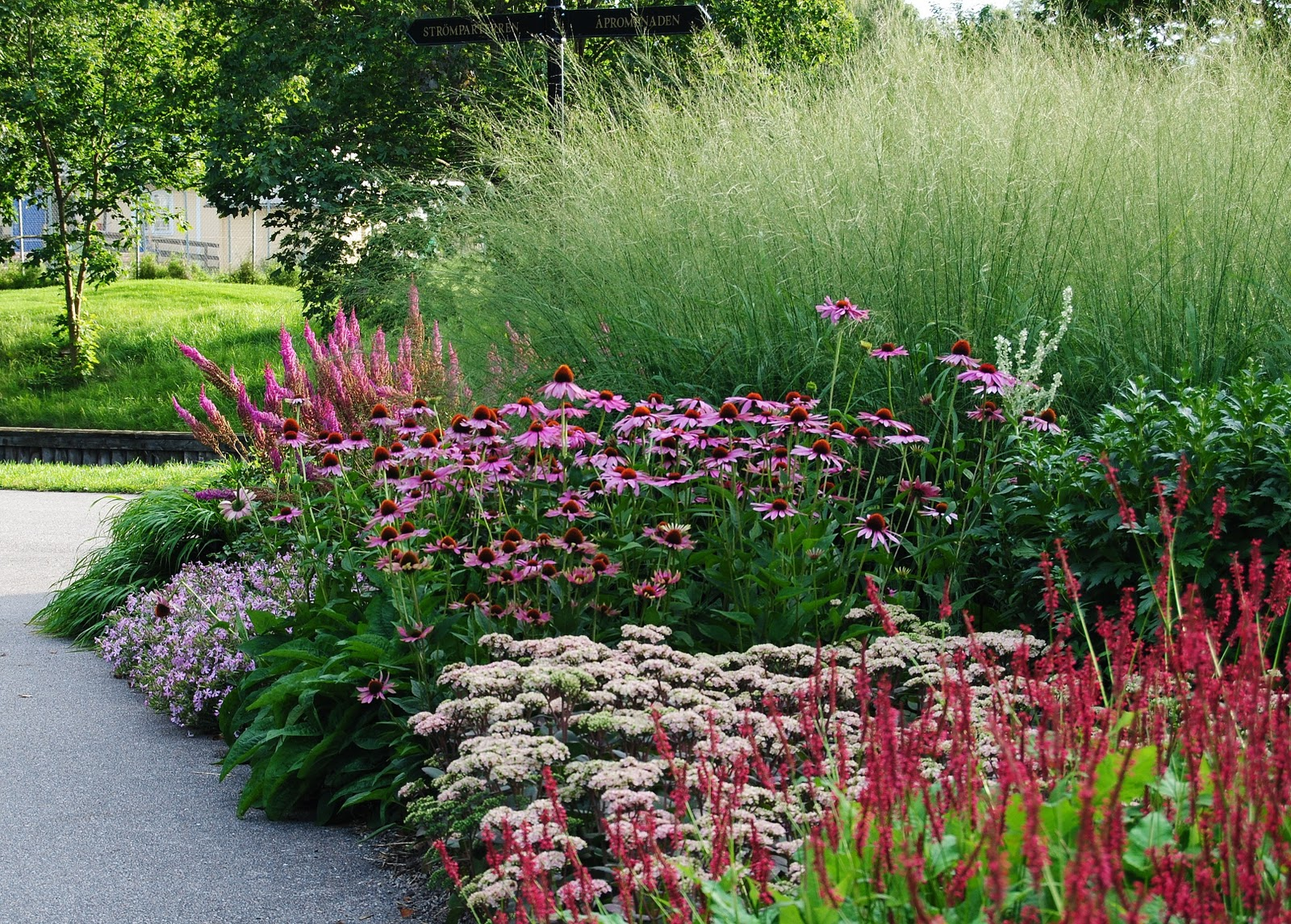 Border plants on pinterest perennials gardening and shrubs for Piet oudolf planting schemes
