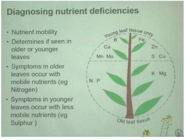 plant mineral deficiencies