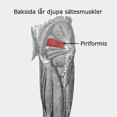 ont i musklerna