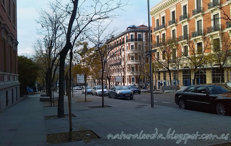 linea de árboles por la calle