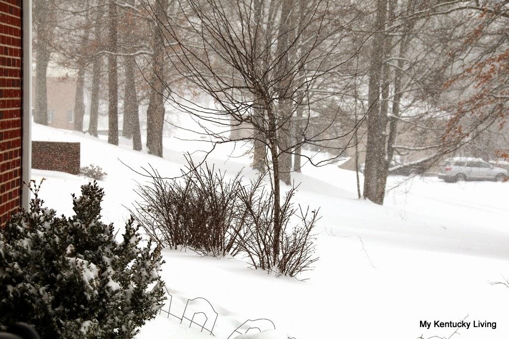 snow in kentucky  feb 2015