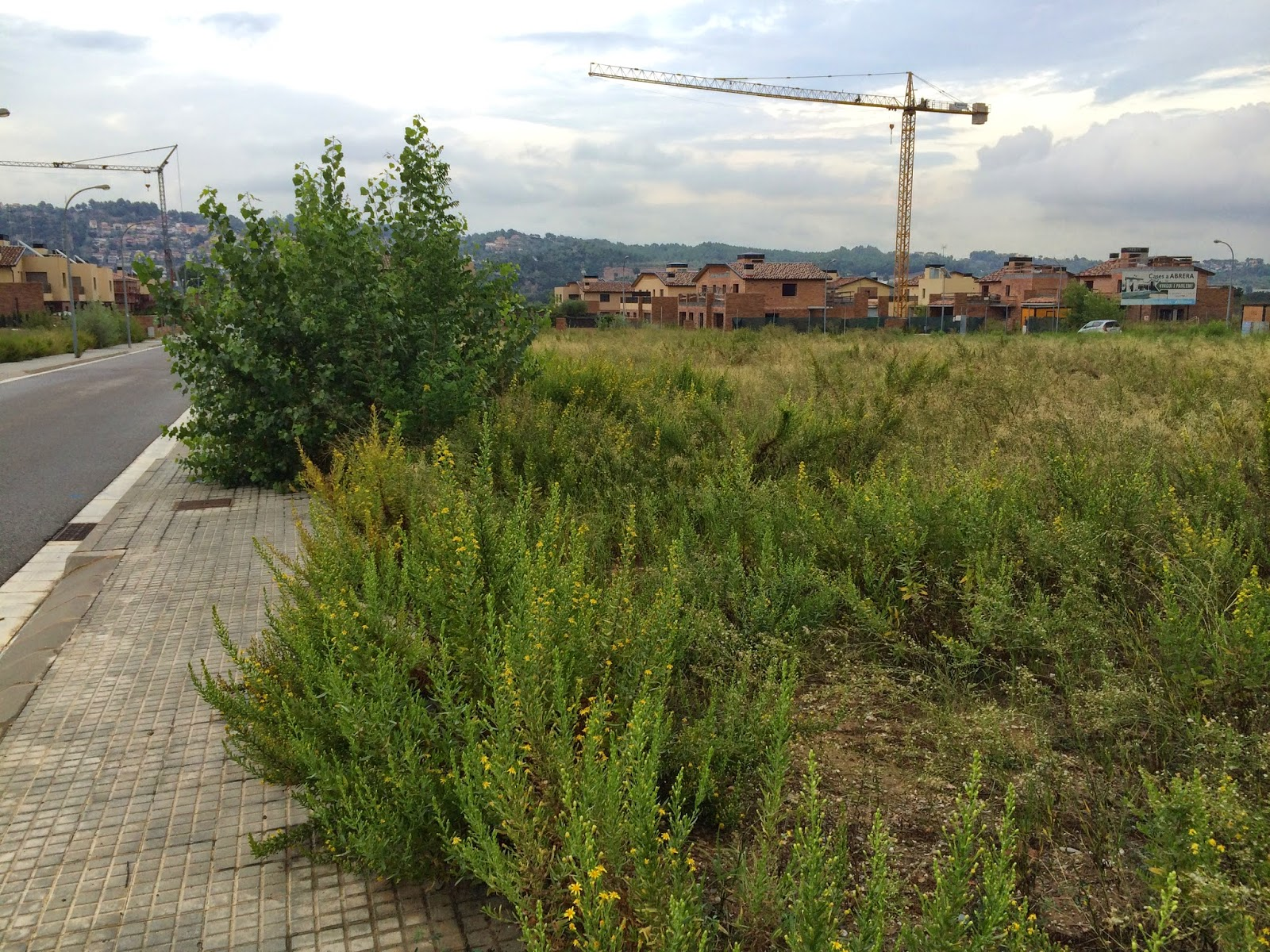 Serviciosdejardineriabasica limpiezas r pidas desbrozado for Jardineria barata barcelona