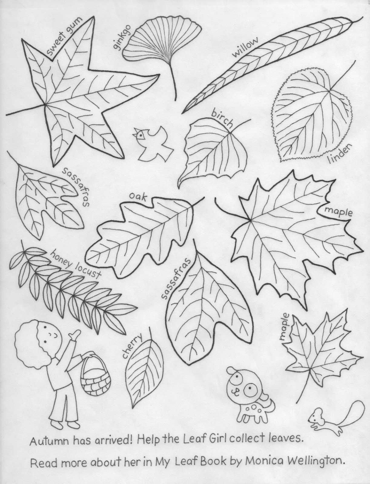 In My Leaf Book I Found All Ten Central Park Close To Where Live NYC Hope Children Enjoy Finding Lots Of Leaves Around They Too
