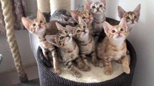 Huit chatons totalement hypnotisés et si mignons !