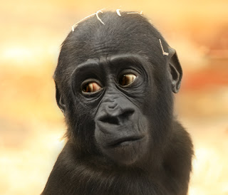 ملف كامل عن اجمل واروع الصور للحيوانات  المفترسة   حيوانات الغابة  1467784