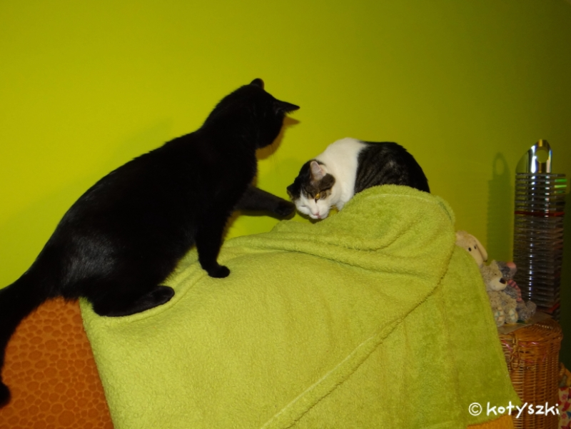 koty, kotyszki