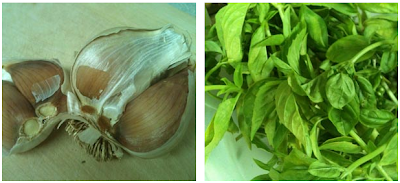Garlic Clove With Fresh Basil