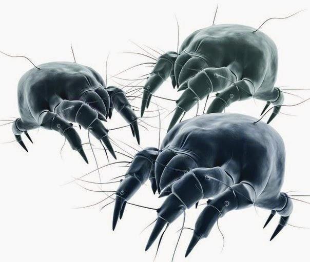 Пылевые клещи: невидимые враги в вашей кровати.