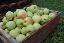 fuji apples from the orchard!