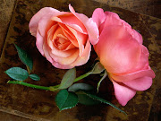 Beautiful Roses Pictures