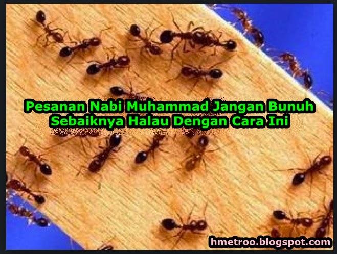 Pesanan Nabi Muhammad Jangan Bunuh Sebaiknya Halau Dengan Cara Ini