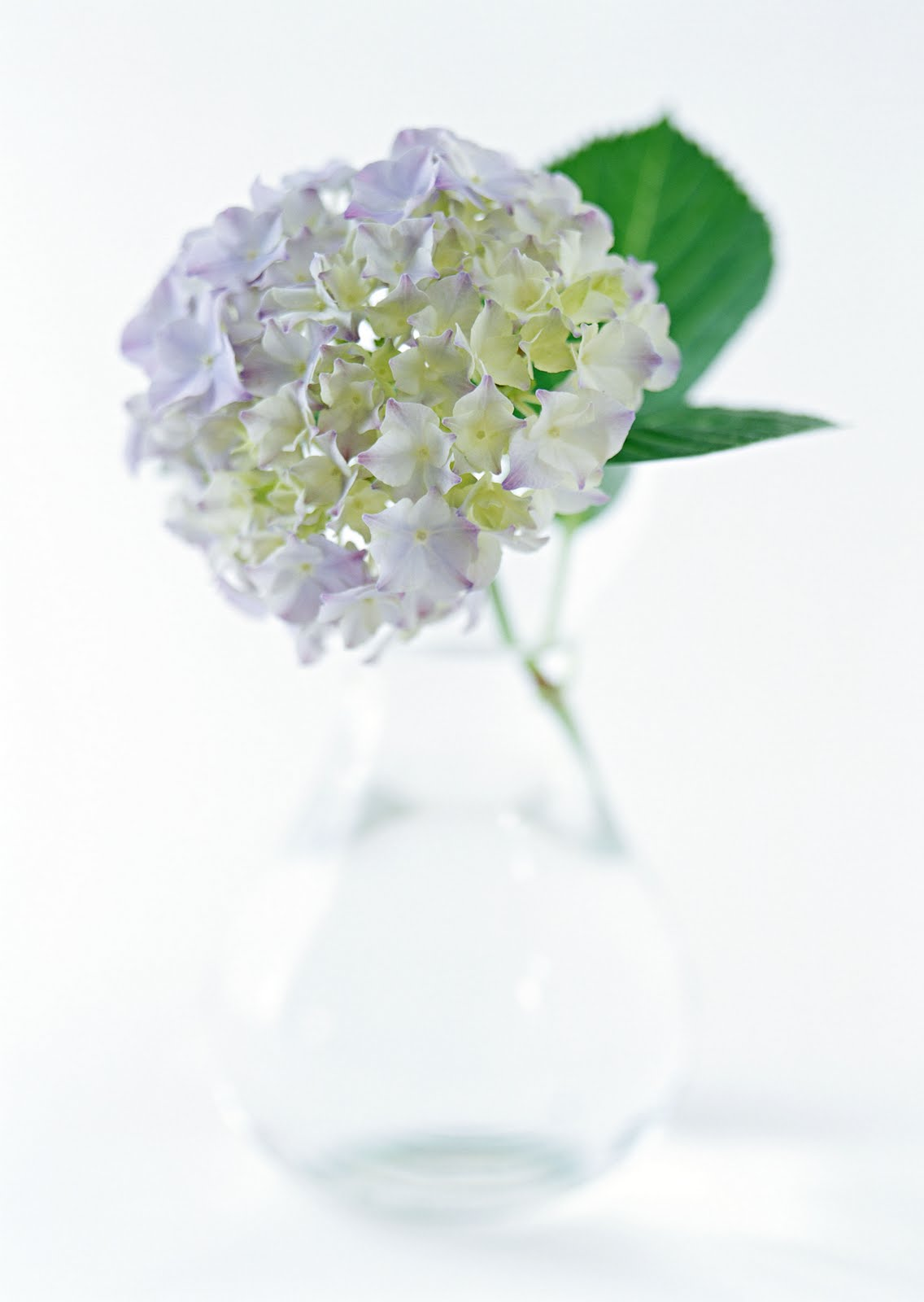 Flowers Collection Wedding Flowers Valentine Flowers Send Flowers