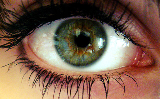 Closeup of a human eye by SheLovesGhosts (CC BY-SA 3.0)