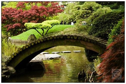 plantas de jardins tipos : plantas de jardins tipos:Tipos+de+plantas+de+jardin.jpg