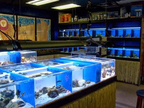Acuariofilia todo sobre ella for Local fish store