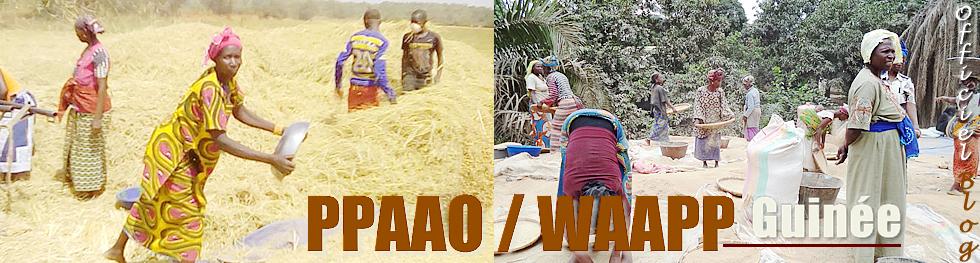 Blog du Programme de Productivité Agricole en Afrique de l'Ouest