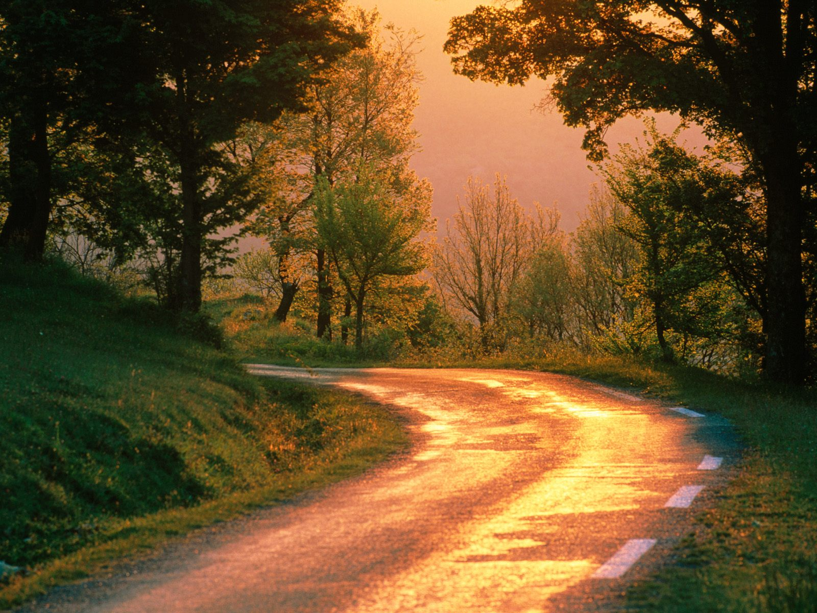 http://1.bp.blogspot.com/-7_-vDfcEg2Y/TtetSDScSuI/AAAAAAAAAWU/yXZ6hGAyVlI/s1600/nature-wallpaper-golden-road-france.jpg