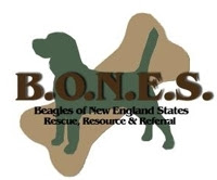 Beagles of New England States Logo