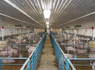 Một trang trại chăn nuôi.