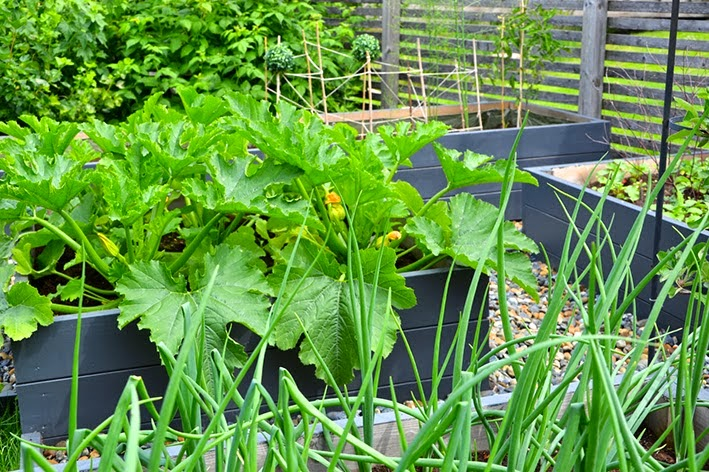 Före och efter – Köksträdgård