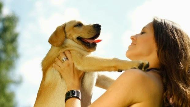 healthy Dog, Dog care, pet health care, dog health care tips, Pet Health care tips, Pet care information