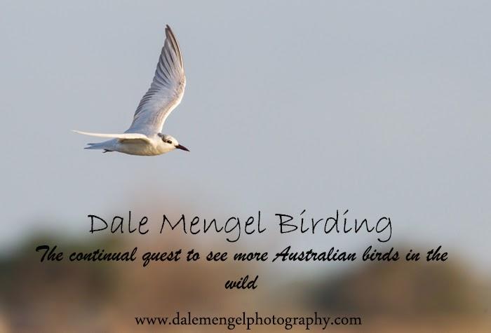 Dale Mengel Birding