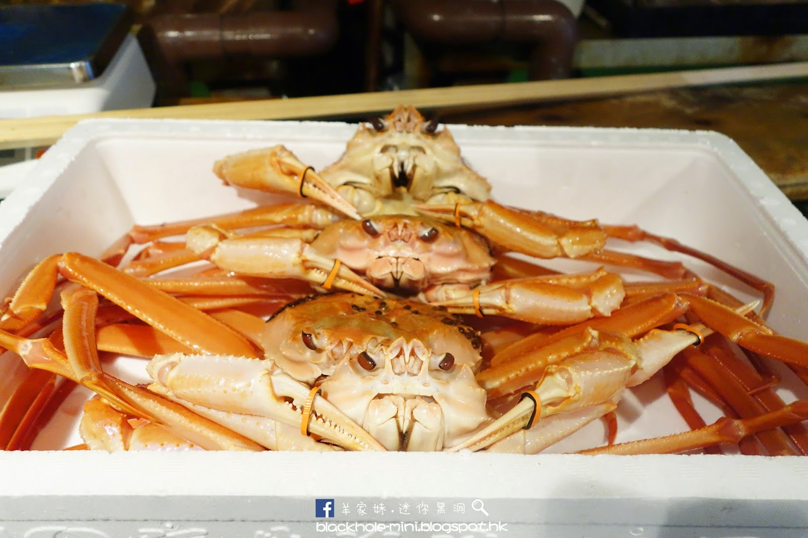 [日本.福井.越前] 貴但值得一吃的越前蟹:越前 蟹の坊