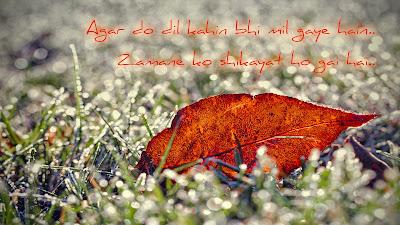 Best love shayari   Hindi shayari HD wallpaper