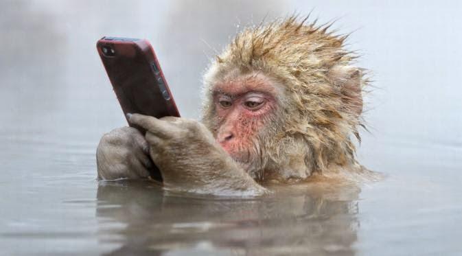 Foto Monyet Pakai iPhone Menang Kontes Fotografi Dunia