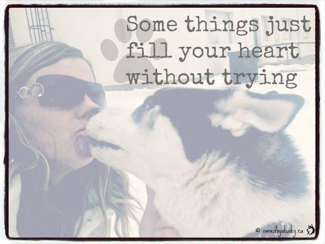 #NationalDogDay dog quote