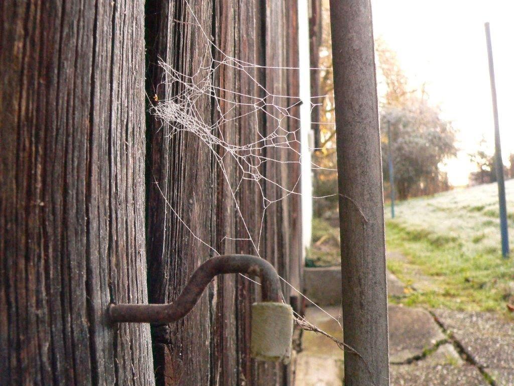 Spinnennetz Weihnachten Bayern draußen Holz eisig