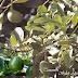 Khasiat dan Manfaat tanaman buah alpokat  terhadap kesehatan