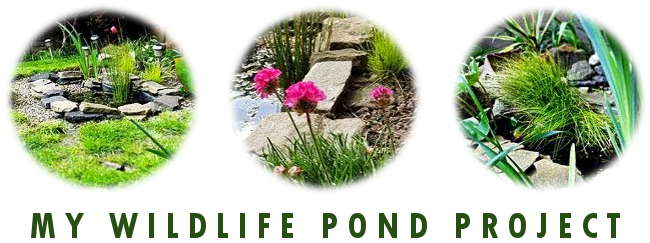My Wildlife Pond Project Blog