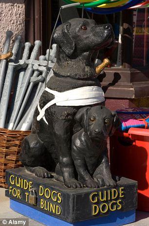Blind Dog Charity Uk