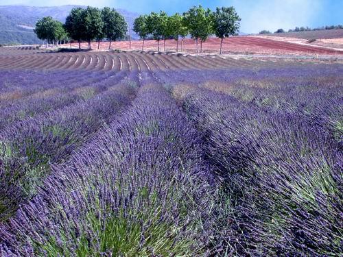 I principi attivi delle erbe e delle piante officinali