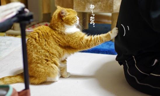 Gato con comportamiento kawaii