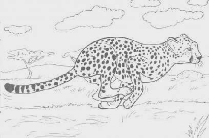 Cheetah Coloring Sheet