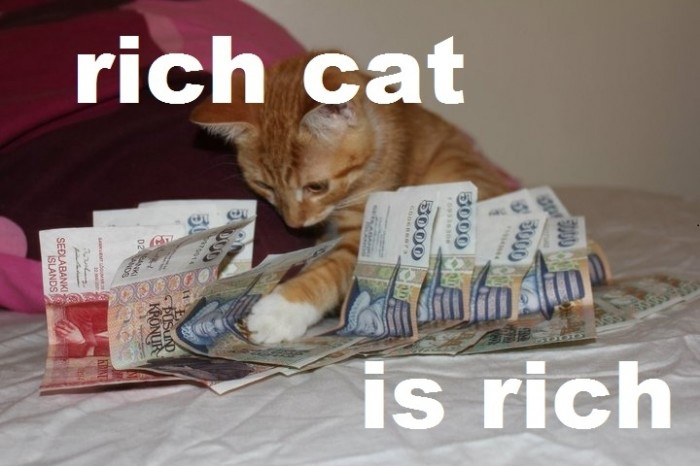 Rich Cat Is Rich
