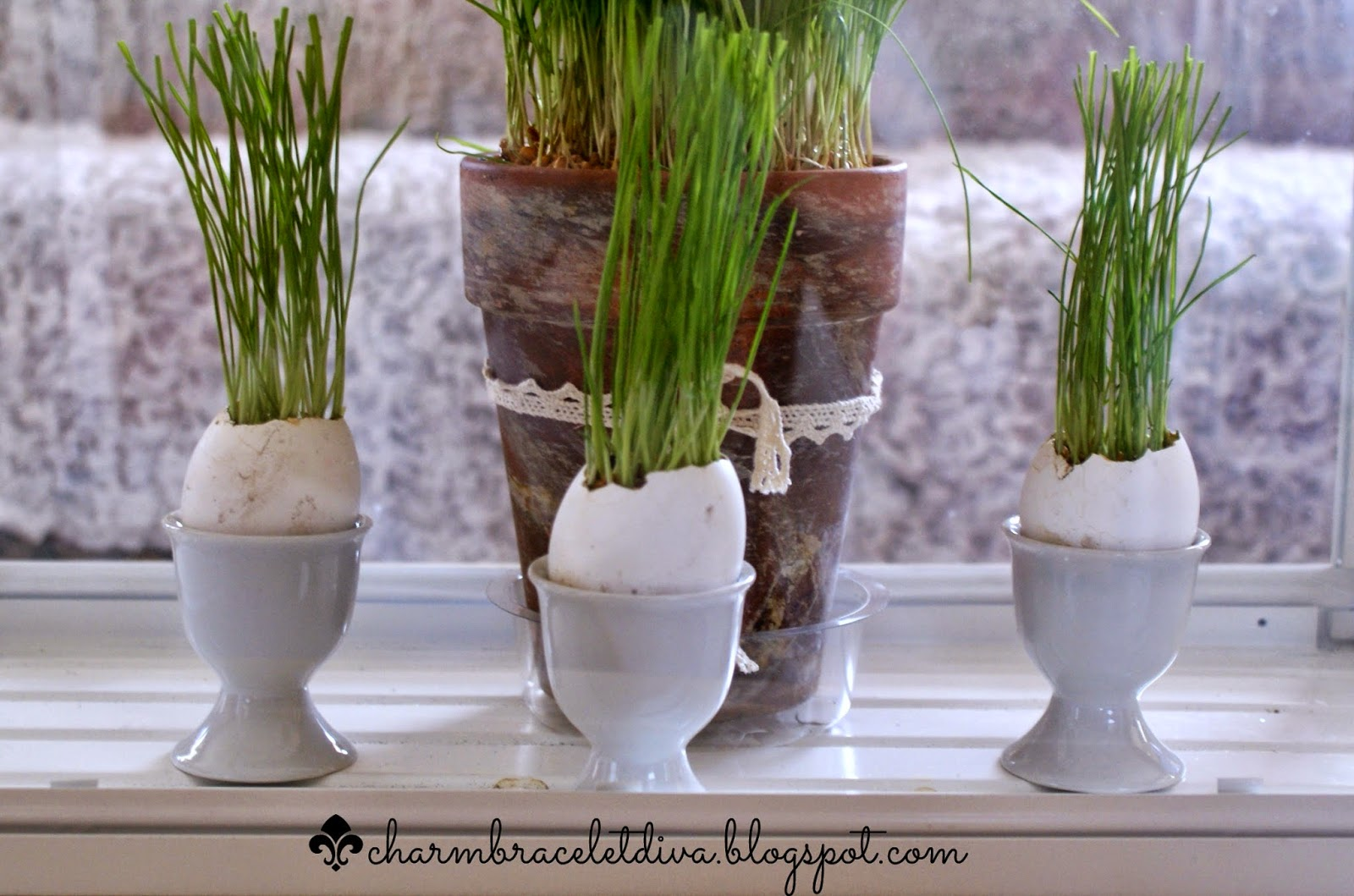 wheat grass growing in egg shells in Ikea terrarium