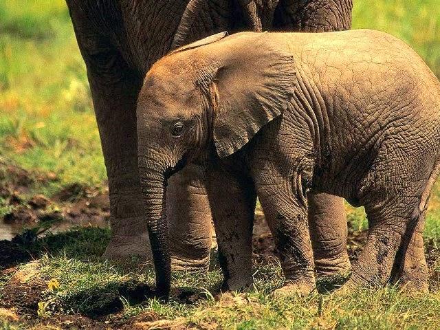 самые красивые картинки животных - Фото и картинки животных