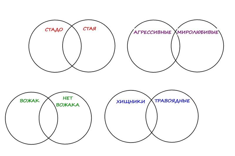 круги Эйлера