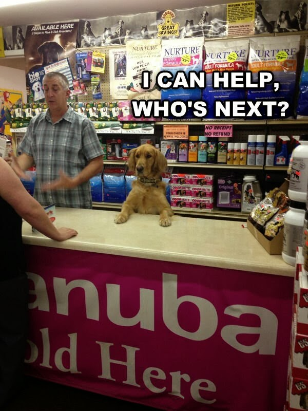 30 Funny animal captions - part 19 (30 pics), dog store clerk, dog meme, i can help, who's next
