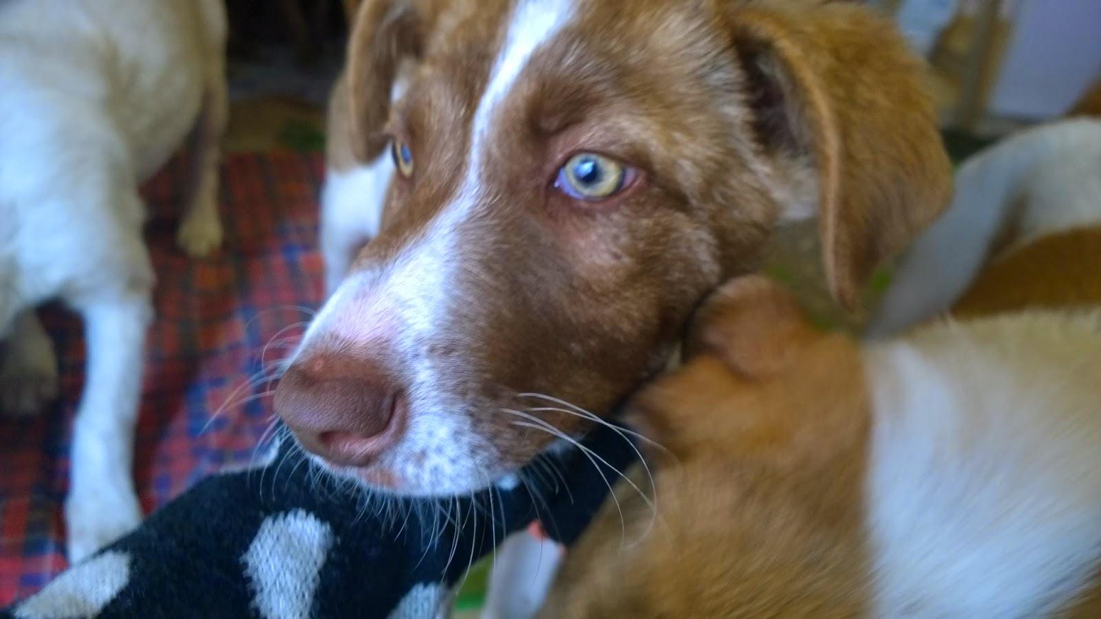 cucciolona palermo livoro cane adozione