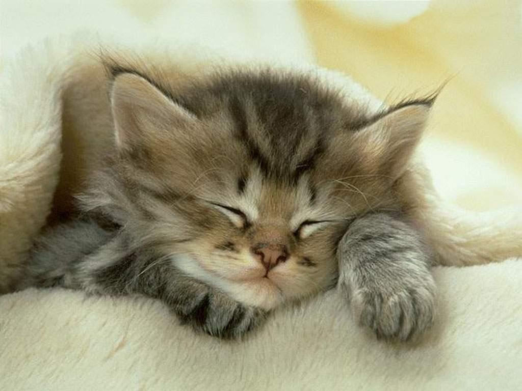 Gambar Kucing Tidur 2