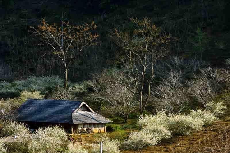 Moc Chau plateau - beautiful dreamy