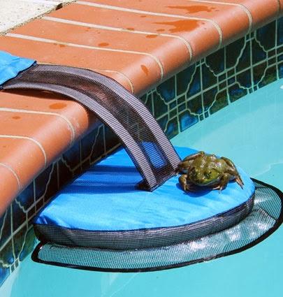 Okanagan Similkameen Stewardship: amphibian escape ramp