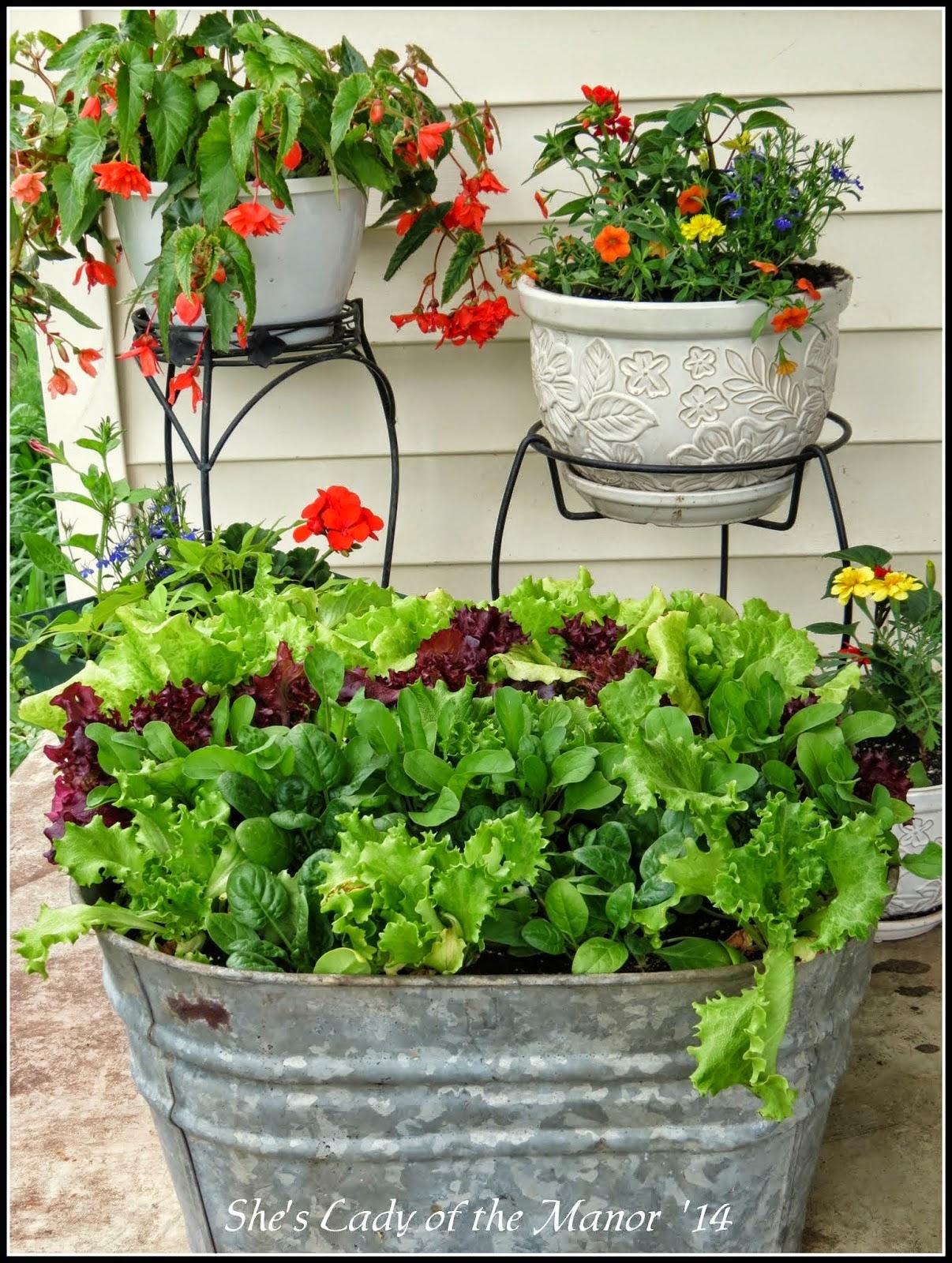 tub salad garden