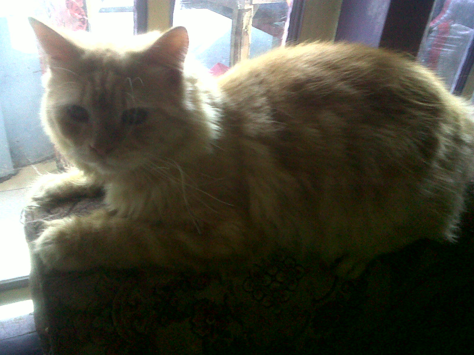 Memek Berbulu Esha dengan kucing