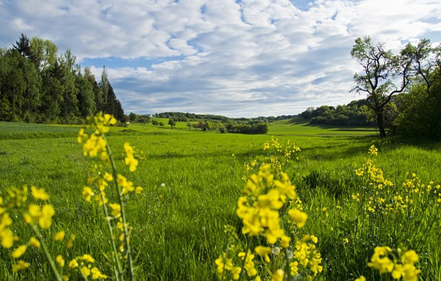 Ekosistem Darat Padang Rumput