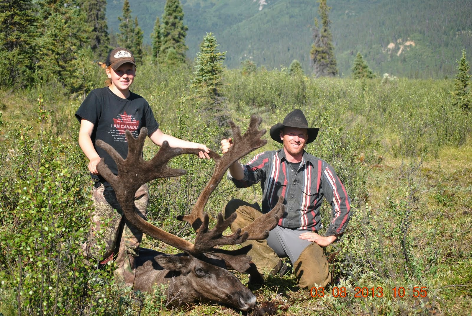 August Caribou